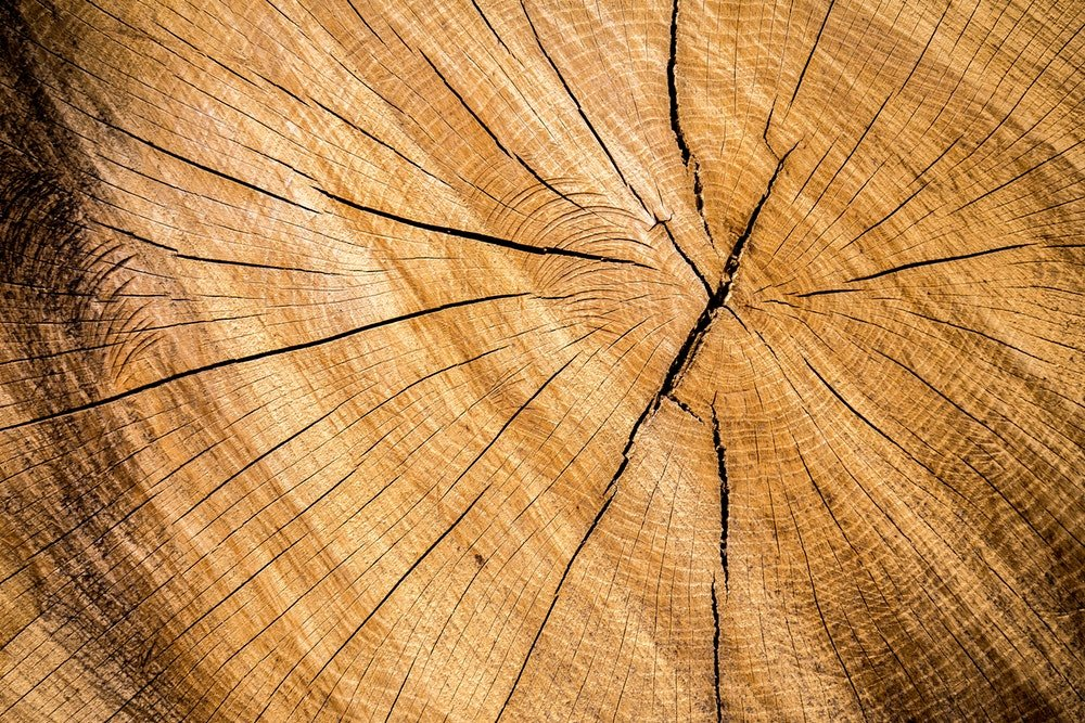 Die stärksten Bäume der Welt